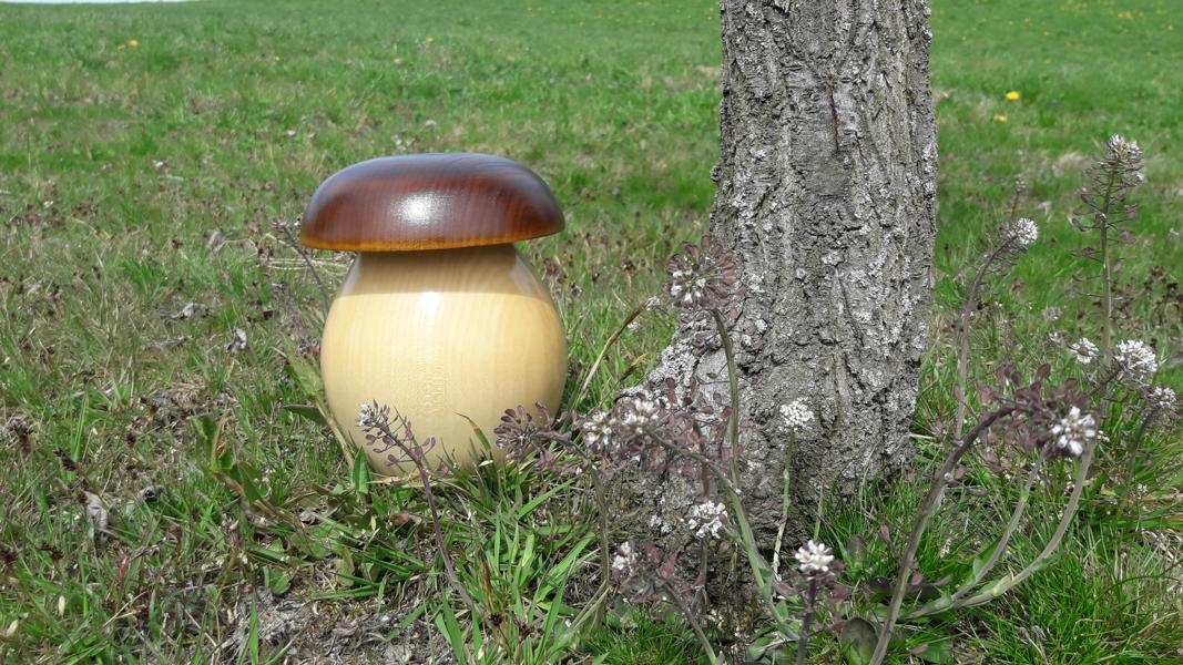 Braunkappen-Pilze