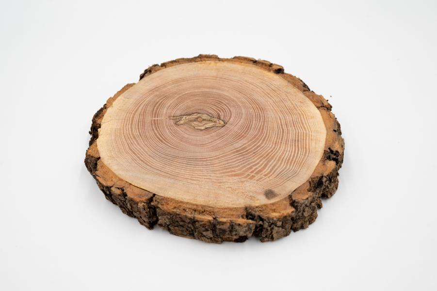 Eschenholz-Baumscheiben